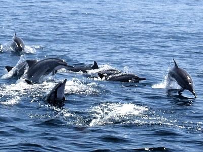 遇見海中精靈 太平洋賞鯨航海之旅